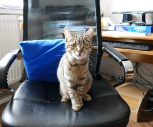Márton, a hivatali macska sikerével foglalkozik a helyi magazinműsor